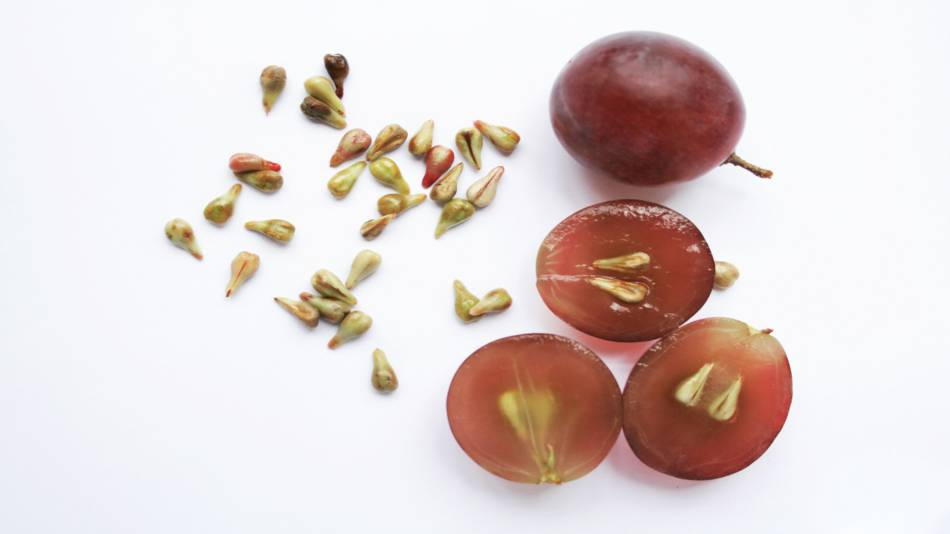 Benefits of Grape Seed Extract -- grapes and seeds