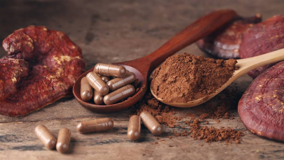 Reishi Mushroom Supplements for the Immune System -- reishi mushroom, mushroom powder and pills in spoons on a table