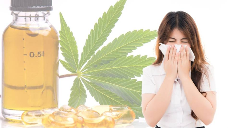 CBD for Colds or the Flu