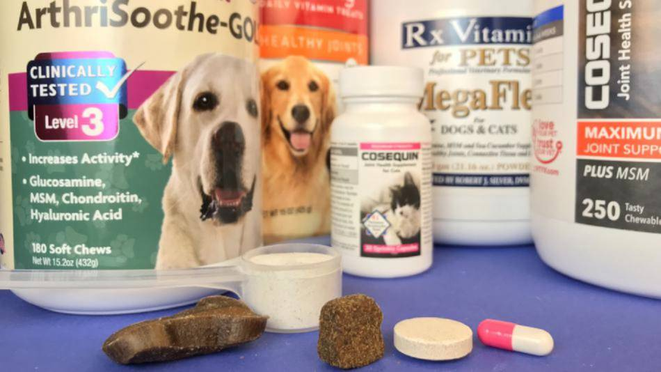 See Which Pet Supplements for Joint Health Passed Our Tests and Which Didn't!